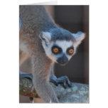Tarjeta de felicitación joven del Lemur