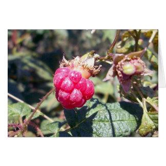 Tarjeta de felicitación jugosa de la fruta