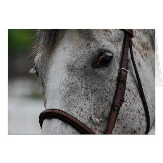 Tarjeta de felicitación linda del caballo del Appa