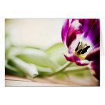 Tarjeta de felicitación macra del tulipán vacía