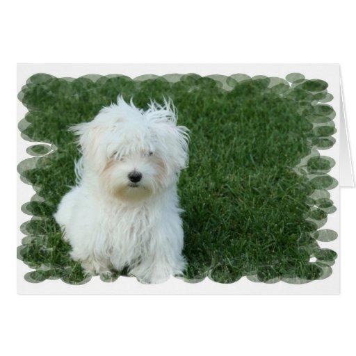Tarjeta de felicitación maltesa de los perritos
