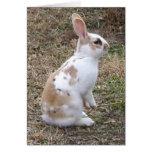 Tarjeta de felicitación manchada del conejo de con