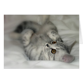 Tarjeta de felicitación manchada plata del gatito