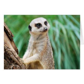 Tarjeta de felicitación maravillosa de Meerkats