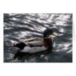 Tarjeta de felicitación masculina del pato del pat