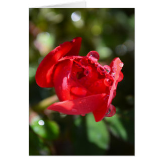 Tarjeta de felicitación miniatura del rosa rojo