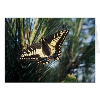 Tarjeta de felicitación - naturaleza - mariposa en