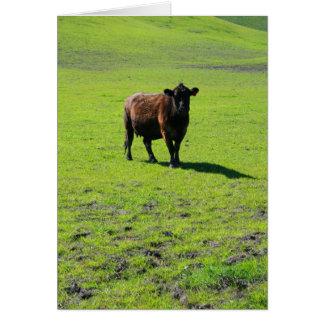Tarjeta de felicitación negra de la vaca tarjeta