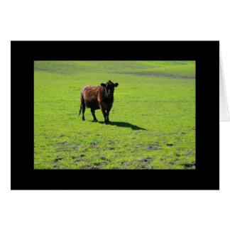 Tarjeta de felicitación negra de la vaca y tarjeta