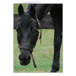 Tarjeta de felicitación negra del caballo