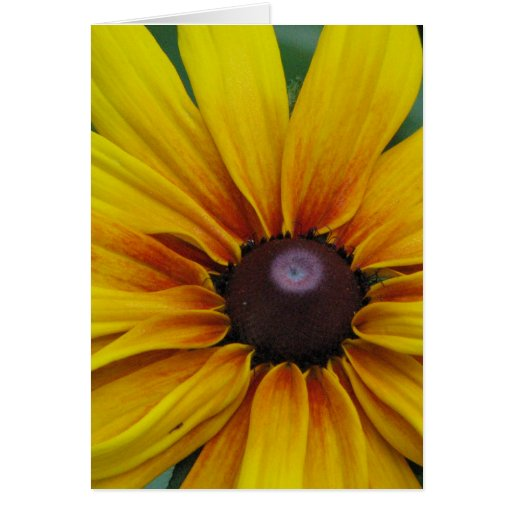 Tarjeta de felicitación observada negro de la flor