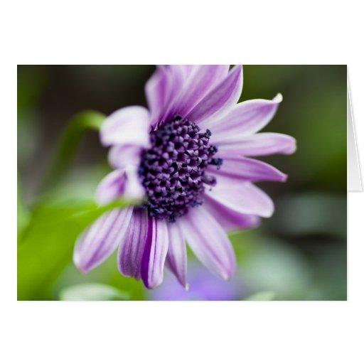 Tarjeta de felicitación púrpura de la margarita af