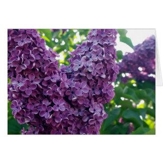 Tarjeta de felicitación púrpura de las lilas