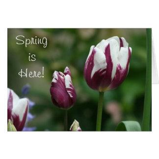 Tarjeta de felicitación púrpura de los tulipanes
