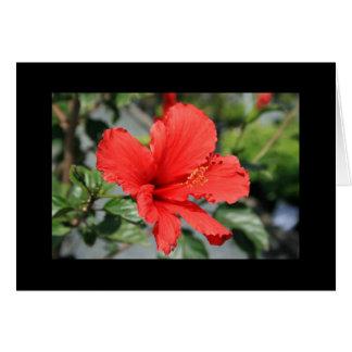 Tarjeta de felicitación roja de la flor del hibisc