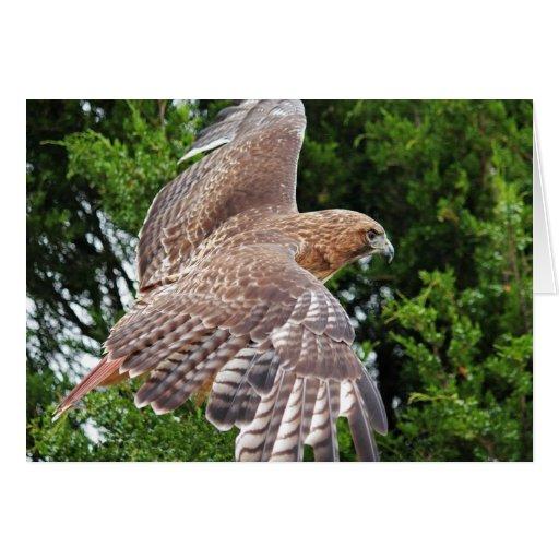 tarjeta de felicitación Rojo-atada del halcón