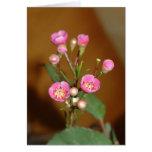 Tarjeta de felicitación rosada de la flor