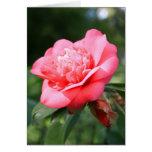 Tarjeta de felicitación rosada de la flor de Camel