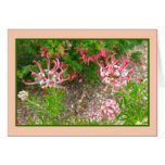 Tarjeta de felicitación rosada de las flores de ar
