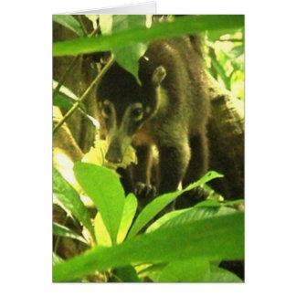Tarjeta de felicitación salvaje del Coati