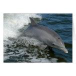 Tarjeta de felicitación salvaje del delfín