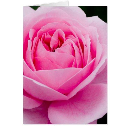 Tarjeta de felicitación subió del rosa en colores