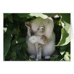 Tarjeta de felicitación tímida del gato