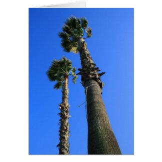 Tarjeta de felicitación tropical de las palmeras
