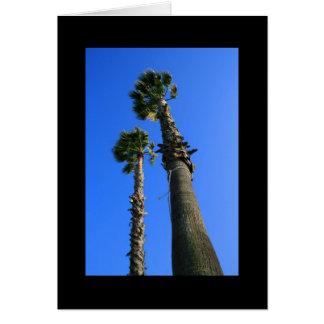 Tarjeta de felicitación tropical de las palmeras y