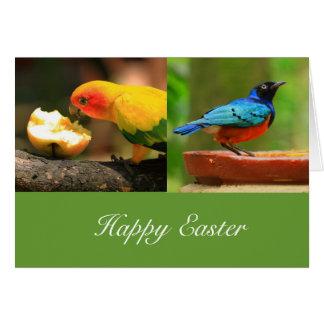Tarjeta de felicitación tropical de Pascua de los