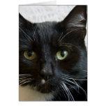 Tarjeta de felicitación vertical: Lilly el gato