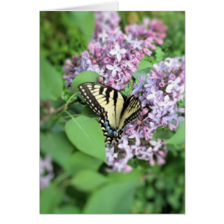 Tarjeta de felicitación - Y Swallowtail en lila