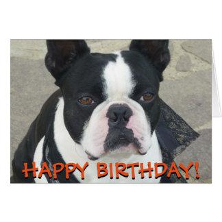 Tarjeta de felicitaciones de Boston Terrier