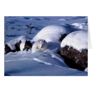Tarjeta de felicitaciones del Fox ártico