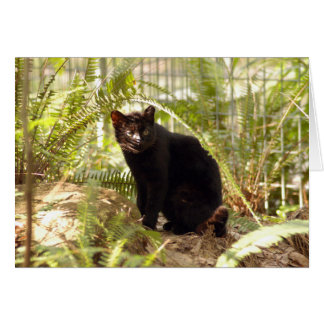 Tarjeta de Geoffroy Cat-010