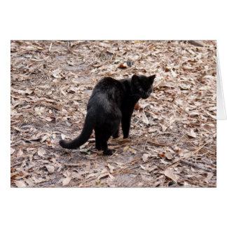 Tarjeta de Geoffroy Cat-015