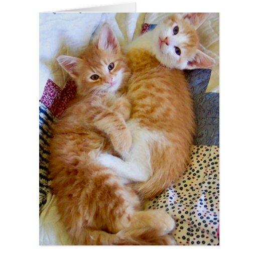 Tarjeta de imagen del amor del gato de los Soulmat