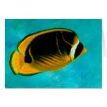 Tarjeta de Kikakapu (Butterflyfish del mapache)