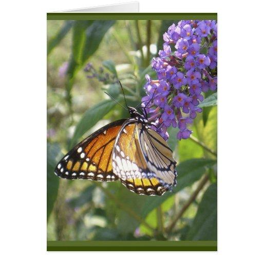 Tarjeta de la alabanza de la mariposa de monarca