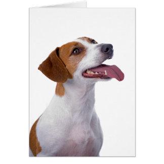 Tarjeta de la amistad de Jack Russell Terrier