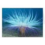 Tarjeta de la anémona de mar de la vida marina