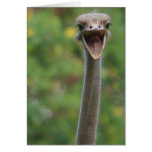 Tarjeta de la avestruz