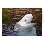 Tarjeta de la ballena de la beluga