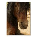 Tarjeta de la belleza del caballo de Morgan
