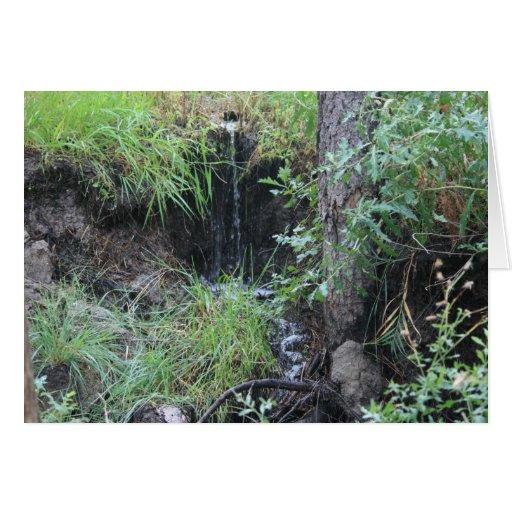 Tarjeta de la cascada 2 del arbolado