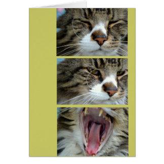 Tarjeta de la celebración/de cumpleaños del gato d
