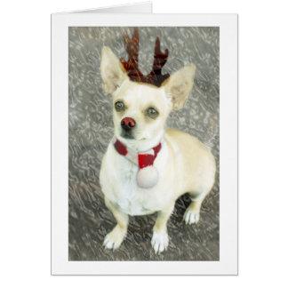 Tarjeta de la chihuahua del navidad