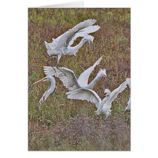 Tarjeta de la confrontación del Egret