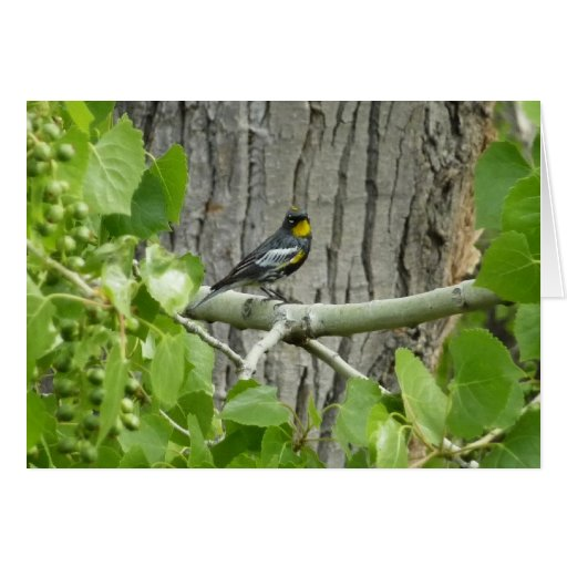 Tarjeta de la curruca de Audubon