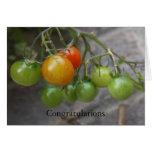 Tarjeta de la enhorabuena de la planta de tomate
